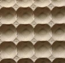 ant-crafts-egg-cartons-800x800.jpg